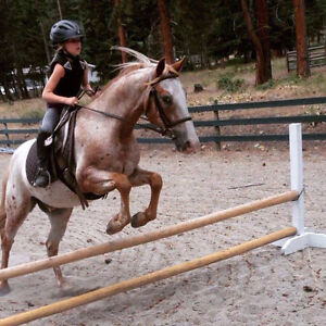 Flashy Hunter/Jumper/Jr.Event Prospect Pony