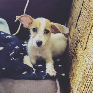 Rescue Puppy for Adoption!
