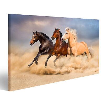 Bild Bilder auf Leinwand Pferd laufen EVU-1K