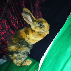 Bunny free to a good home