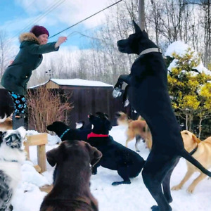Pet Sitting & Doggy Daycare Belleville