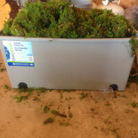 REAL MOSS! Wedding/Decor/Crafts, Paid $400+, asking 200 OBO