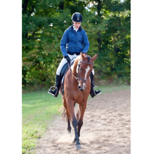 Eventing Horse, 10 year old TB Gelding