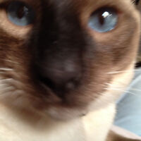Barrehaven and Ottawa Classy Cat Sitting - 20 Years Experience