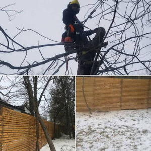 Tree Service - Tree Removal/Pruning - Hedge & Shrub Removal