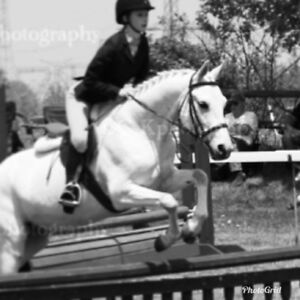 Large welsh pony for sale