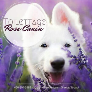 Toilettage Rose Canin / CHIEN & CHAT