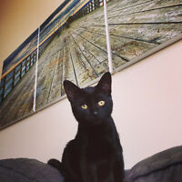 free 1 year old cat come pick it up. all black