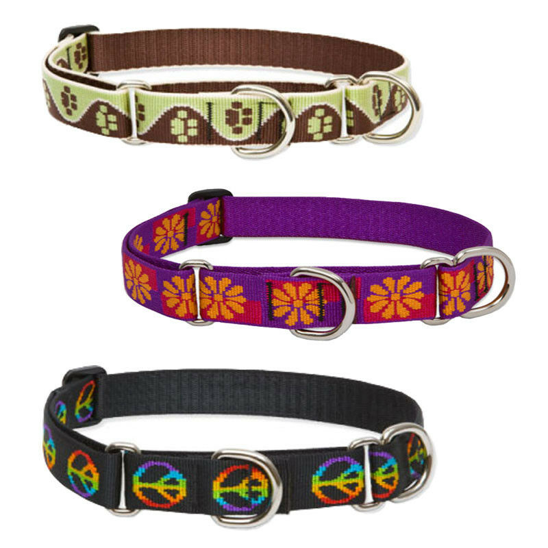 Lupine Martingale Combo Collars 1 Width Made in the USA Lifetime Guaranteed