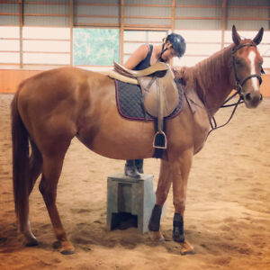 3 year old thouroughbred mare for sale!!