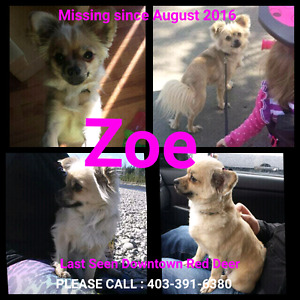 MISSING  SMALL TANNED   FEMALE DOG
