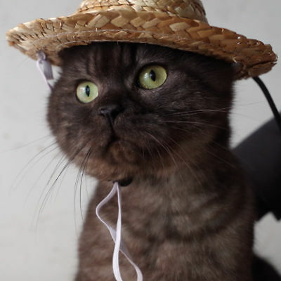 Cute Sombrero Puppy Cat Hat Halloween Funny Costume Pet Clothing Supplies (Cute Cat Halloween Costume)