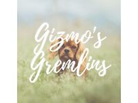 Gizmo's Gremlins - Family run pet care!