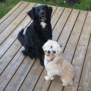 Maggie's Happy Paws Dog Boarding/Daycare Services - Brooklin, ON