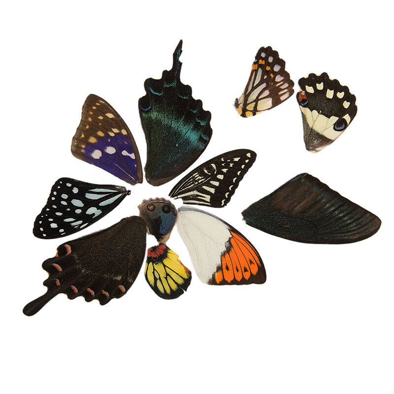 100Pcs Real Butterfly Wings DIY Jewelry Artwork Art Hand Craft Random Gift BWHWC