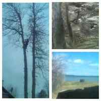 Tree Removal,Stumps ,Trimming.705-294-1314