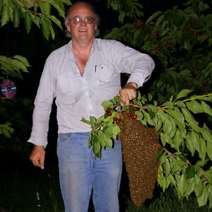 Honey Bee Swarms and Bee removal