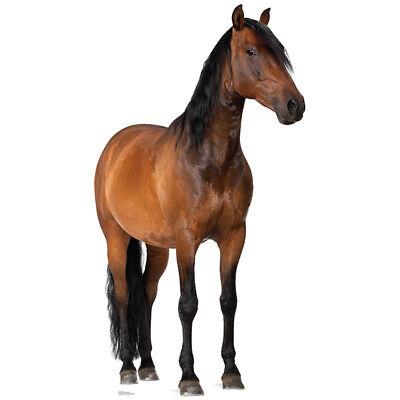 Lifesize Cardboard Cutout (HORSE Lifesize CARDBOARD CUTOUT Standee Standup Poster Chestnut Animal FREE)
