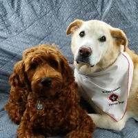 wanted Pet therapy dogs needs to find a house to rent