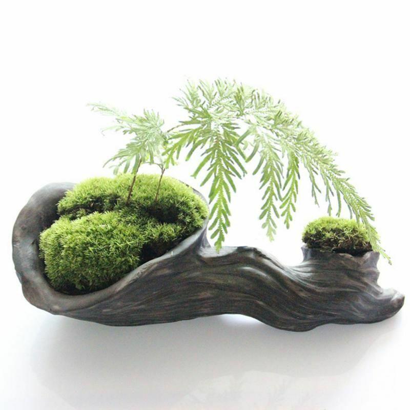 Moss Live Cushion Reptile Terrarium Diy Decor Pure Natural Moss