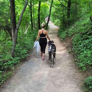 Dog Hikes & Walks - Brantford, ON
