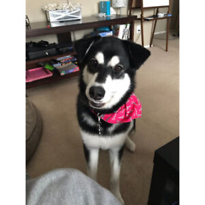 Dog to rehome