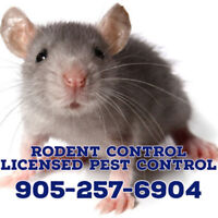 PEST CONTROL, ANIMAL REMOVAL, MOUSE, RAT TREATMENT