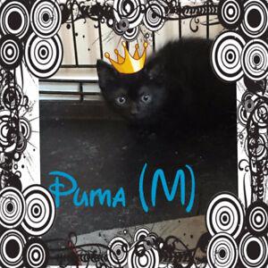 Puma needs a home!