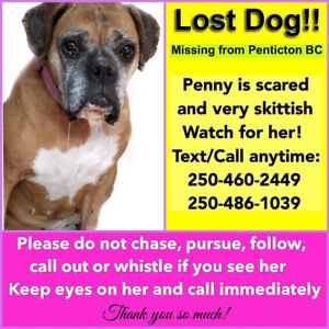 Please help find Penny