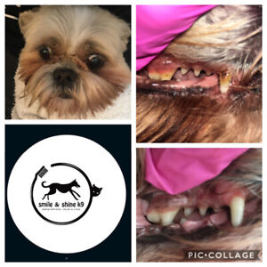 Cosmetic teeth cleaning for cats and dogs