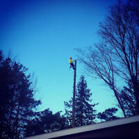 Tree Service at an Affordable Price!