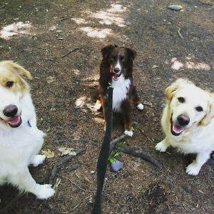 Dog Walking for Downtown Dogs - Private or Group Walks
