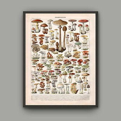 Mushroom Canvas Print Vintage Book Plate Fungus Poster Botanical Wall Art - Plate Wall Art