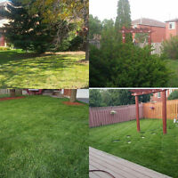 Just Call/Text 6474531506 for Quick Clean Lawn Cutting from $59!