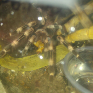 I am willing to take any unwanted scorpions or tarantulas!
