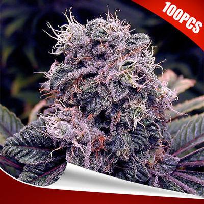 100Pcs/Pack High Quality Rare Seeds Flower Growing Seeds Home Garden 2