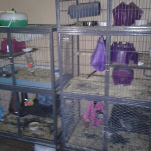5 Chinchilla and cages