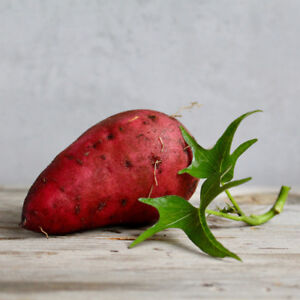 Certified Organic Sweetpotato Slips