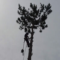 Tree Service: Removals and Pruning Certified Arborist