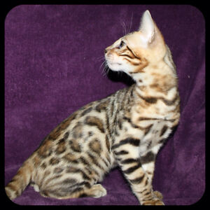 Registered Bengal