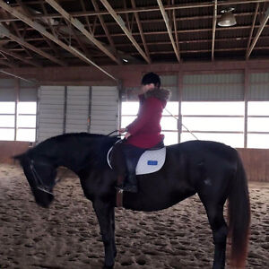 16yr old Canadian Warmblood mare for sale or trade