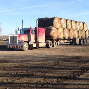 2015 GREEN FEED BALES & HAY BALES FOR SALE