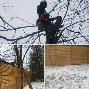 Written Estimate Same Day ! Tree Removal/Pruning (647) 390 9223