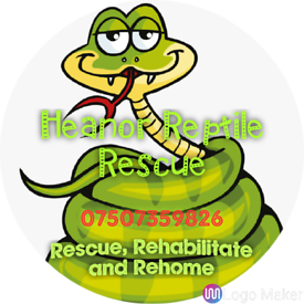 Heanor reptile rescue and rehome