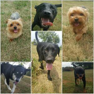 Dog Boarding, Daycare & Training - Balanced K9 Living London Ontario image 2