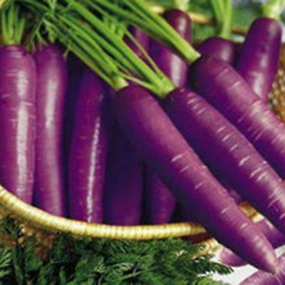 500X Pare Purple Carrot Seeds Organic Vegetable Fruit Plant Seeds New