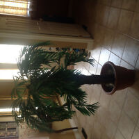 Palm artificial indoor plant about 4.5 ft tall.