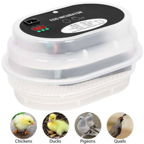 Digital Egg Incubator Hatcher w Temperature Controller Automatic Turning 12 Eggs