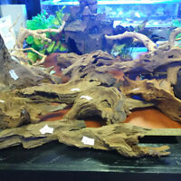 Malaysian Drift Wood / Root Wood