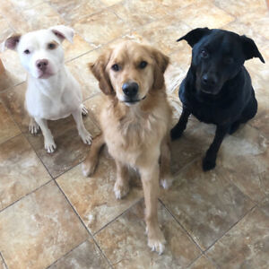 Experienced & Caring Dog Walker/Sitter